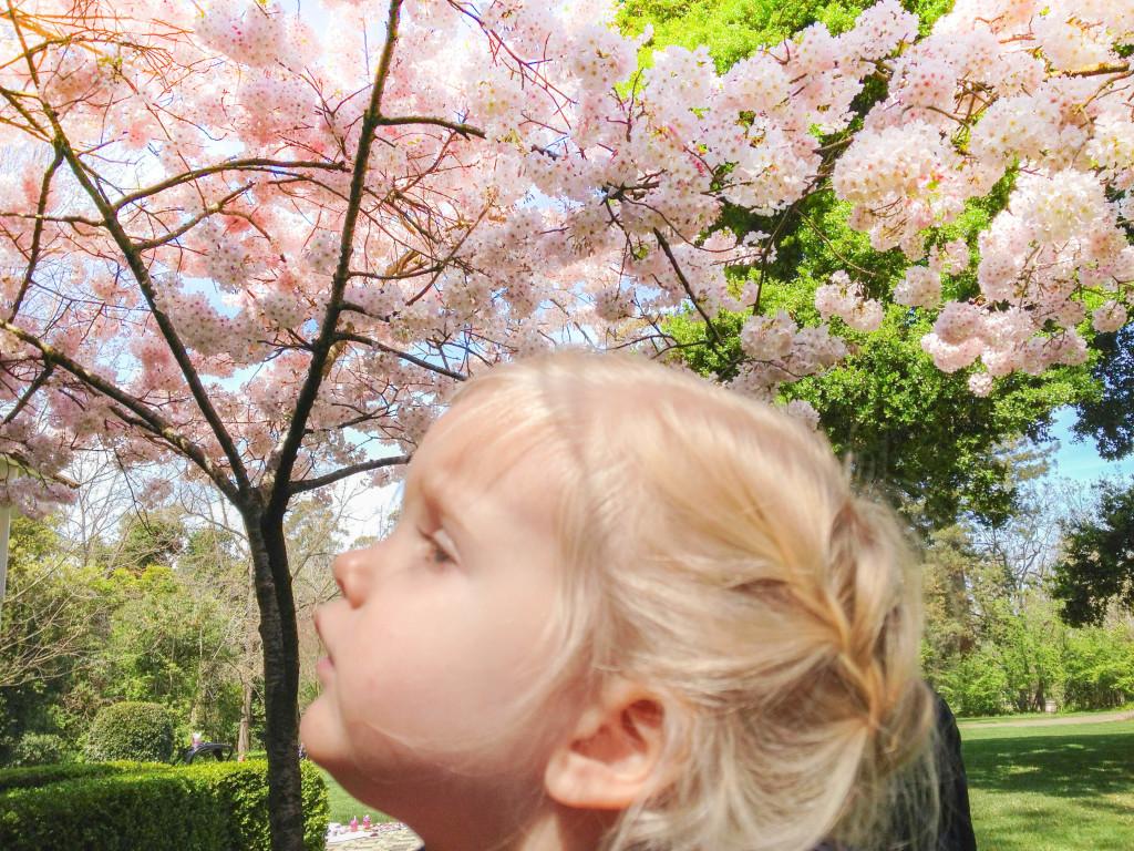 braids-cherryblossomes