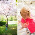 cherry-blossom-braides