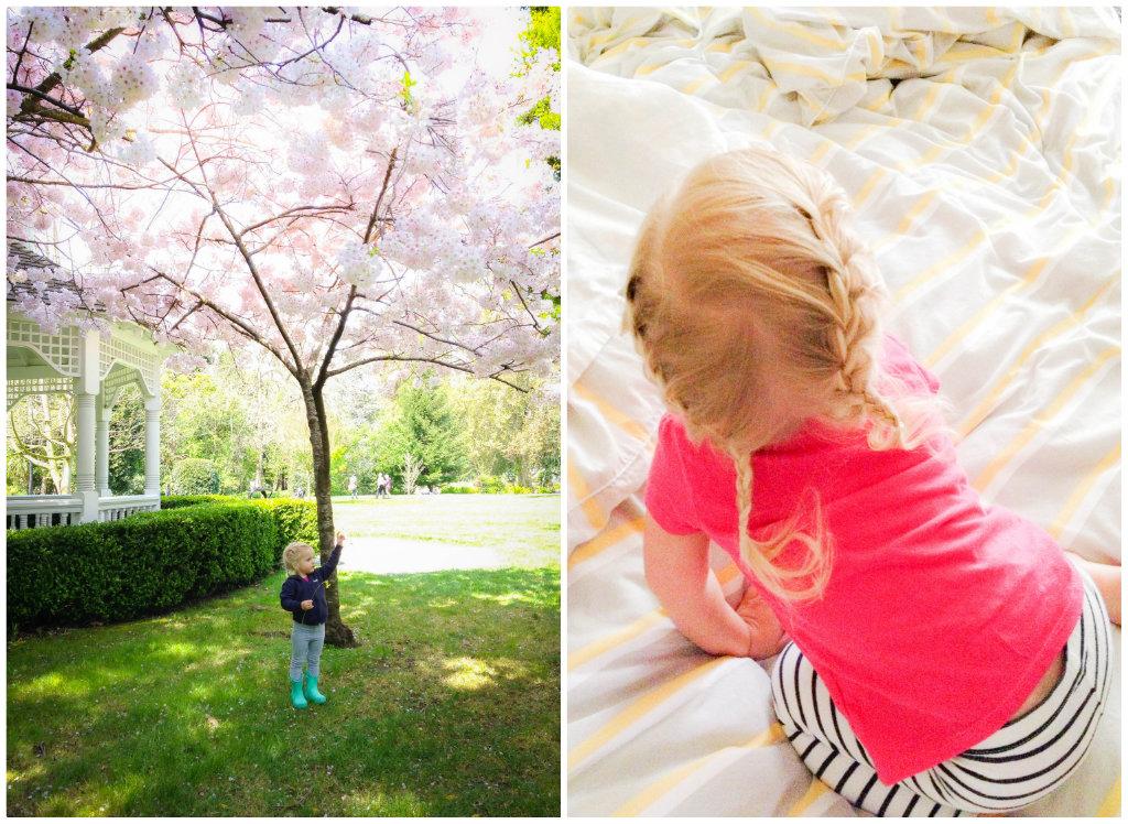 cherry-blossom-braids