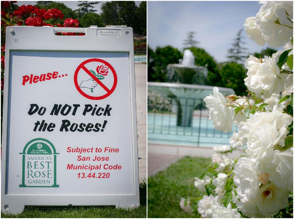 don't-pick-roses