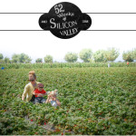 52-weeks-strawberry-picking