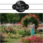 municipal-rose-garden-sj