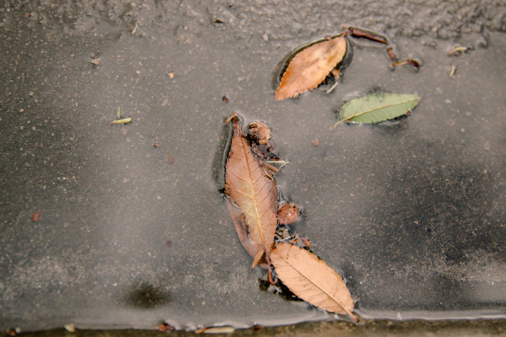leaves-in-puddle