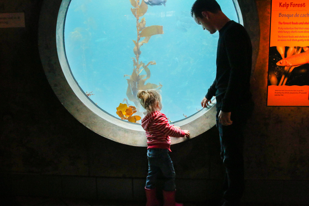 monterey-bay-aquarium