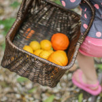 spring-basket