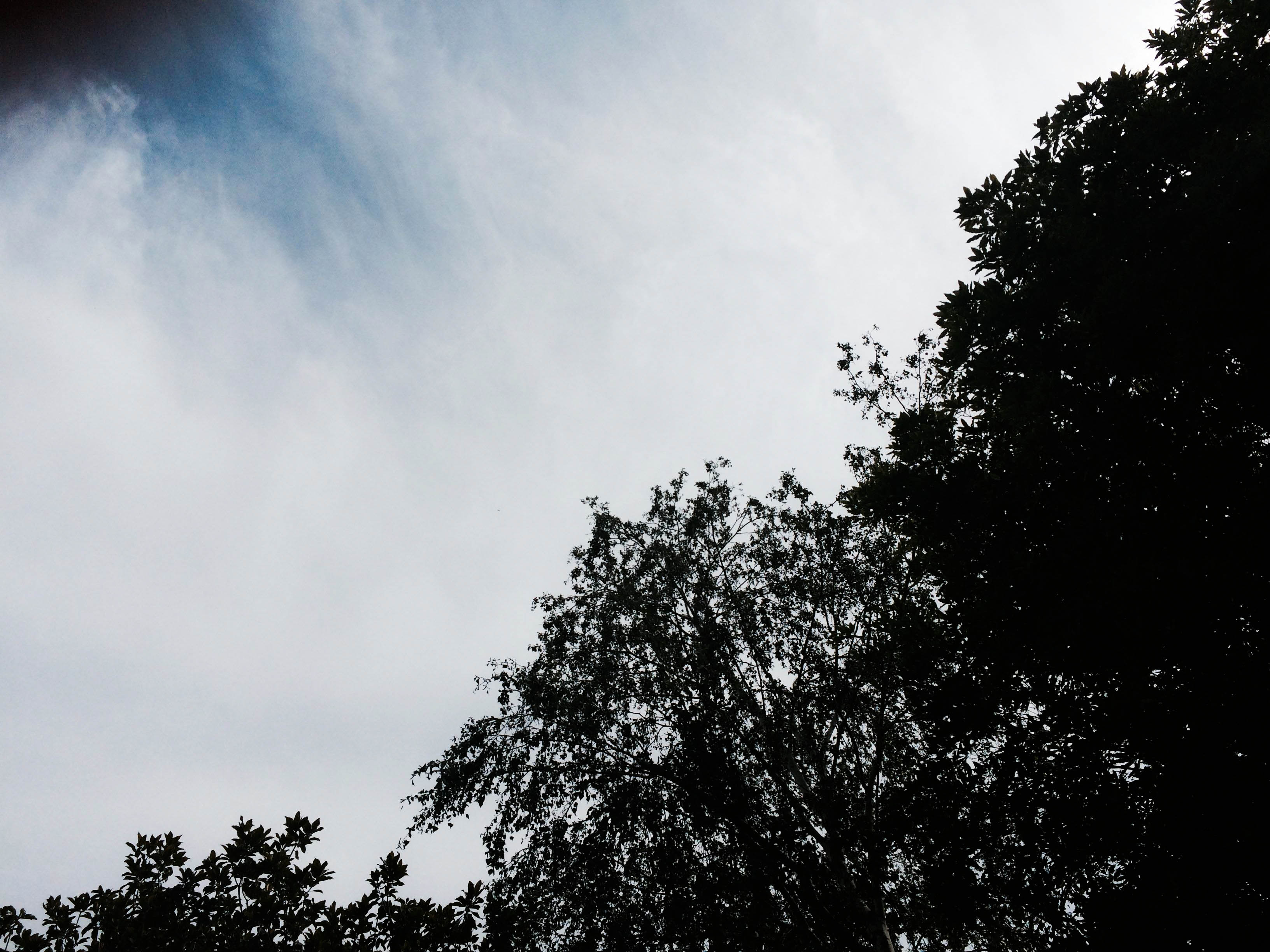 sky-shadow
