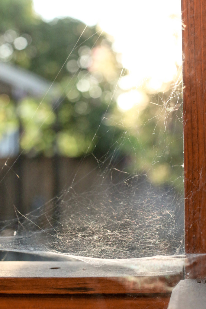 mamas-spider-web